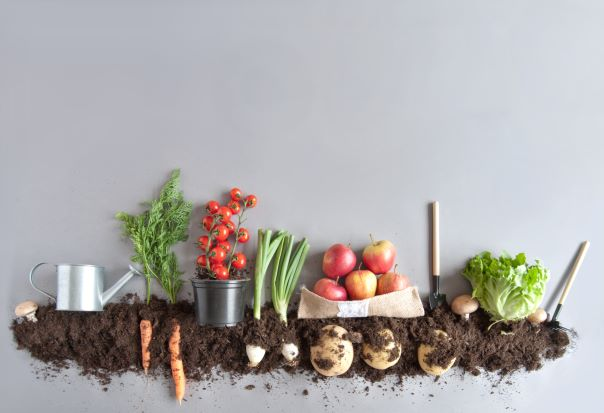 Things To Consider When You Pick Vegetables To Plant In Your Garden