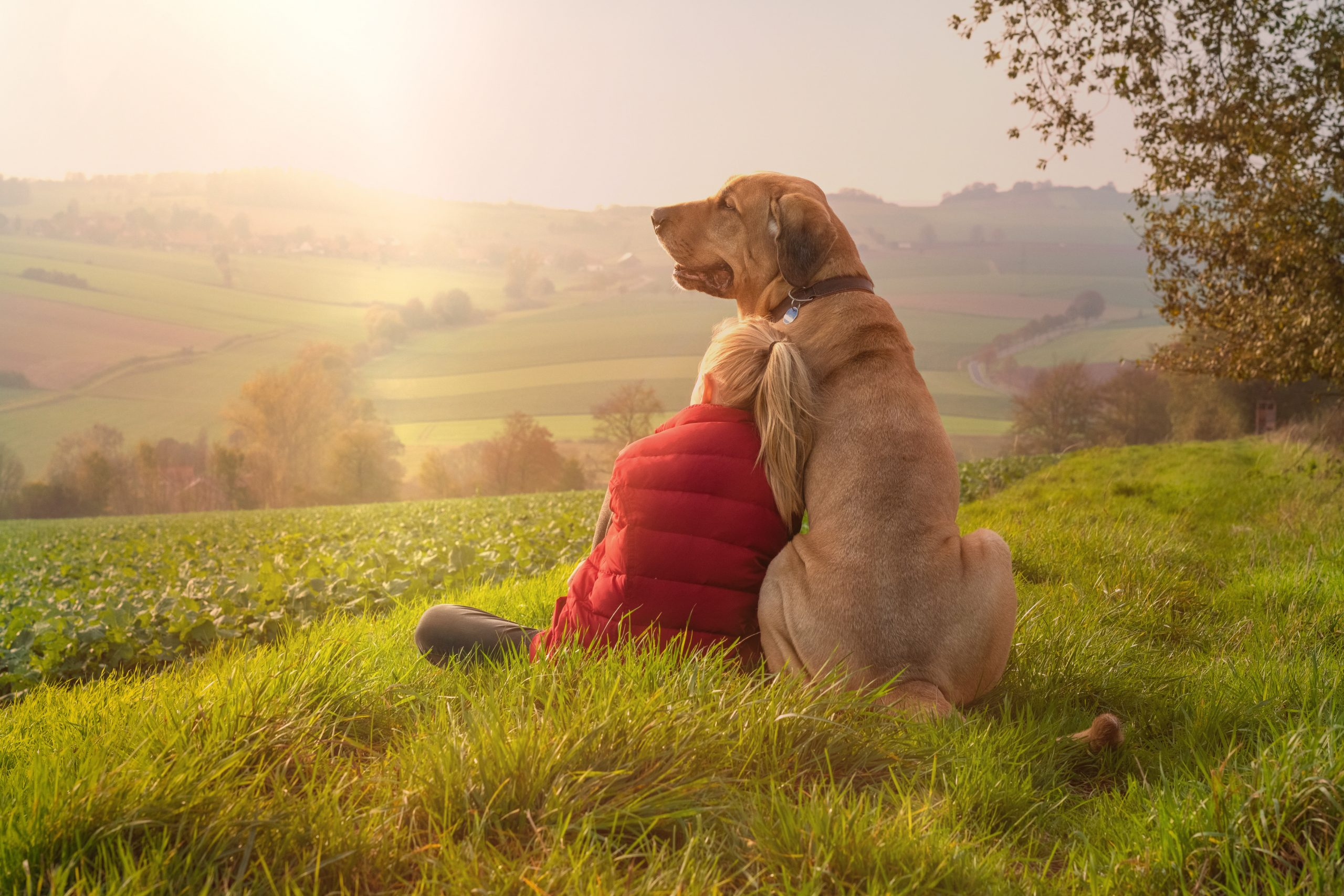 7 Common Problems in Dogs and How to Treat Them